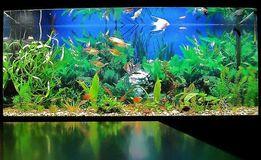Чистка, обслуживание аквариумов