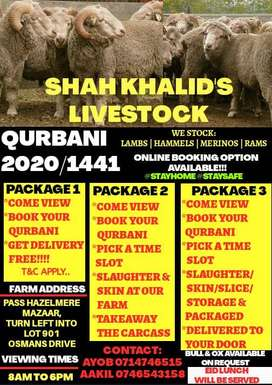 SHEEP FOR SALE...QURBANI 2020