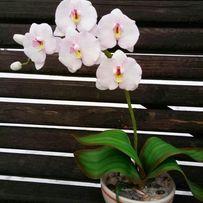 Орхидея ,ручная работа фом*