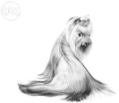 Профессиональная стрижка собак, котов и др. любимцев!