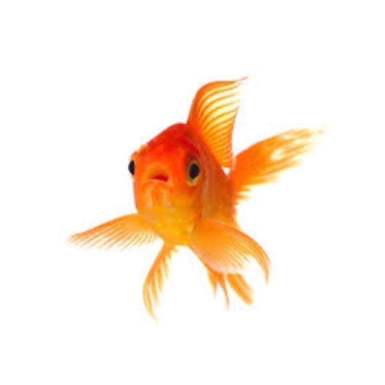 Looking for fish pets supplier 0