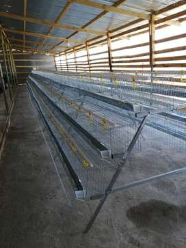 LAYERS CAGE / BATTERY CAGES