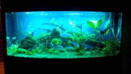 обслуживание аквариума / перевозка