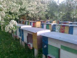 Пчелопакеты, бджолопакети з ДОСТАВКОЮ