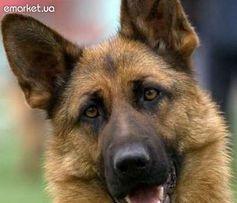 Дрессировка собак, пансион для собак и кошек