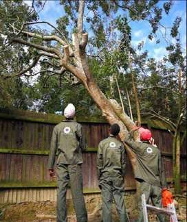 Tree felling and Garden refuse removal.Fully Ensured.From R500