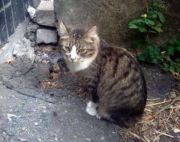 Отдам полосатого котенка, мальчик, 7 месяцев