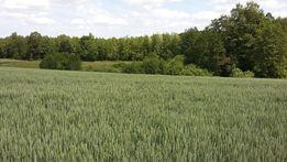 Działka 2972 m z warunkami zabudowy blisko Bydgoszczy