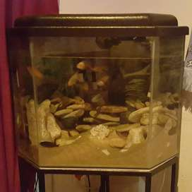 BEAUTIFUL FISH TANKS ON SALES