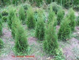 Декоративні дерева і кущі для озеленення