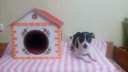 Будка, домик для собаки, отделка - фетр (для квартиры)