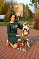 Сибирский Хаски на вязку