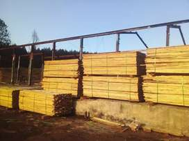 Wet of saw pine wood 2,4m