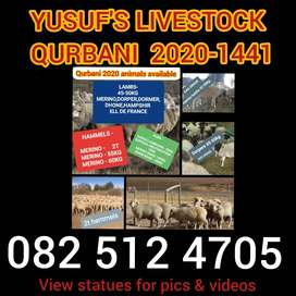 YUSUF'S LIVESTOCK  - QURBANI MADE AFFORDABLE