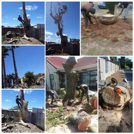 TREE FELLING AND STUMP REMOVAL. FULLY INSURED