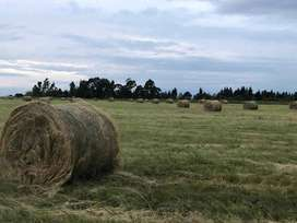 BALES for sale