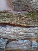 Кора разных пород деревьев для творчества