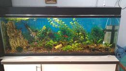 Продам аквариум 120л с рыбками