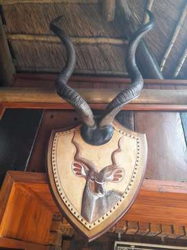 Africa Theme Wooden Shields with leather wood and horns