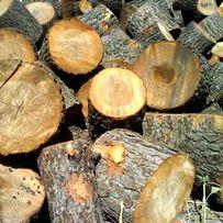Спил деревьев. Спилить дерево.