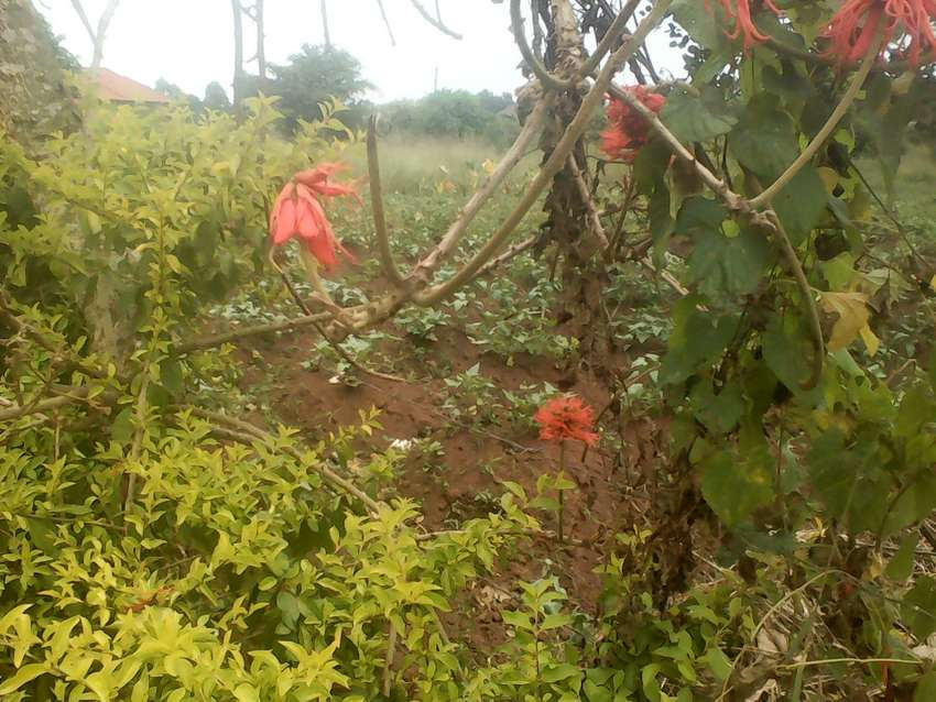 Acre of land with a title in Nsangi on Masaka road 0