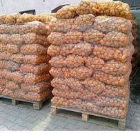 Ziemniaki lord, denar, tajfun
