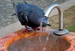 Родниковая вода с доставкой.