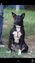 Потерялась собака сука черно-белая Макаровский район село Людвиновка