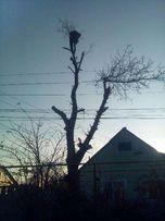 Аккуратно спилить дерево любой сложности в Одессе