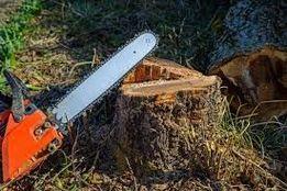 Drwal drzew wycinka wycinanie podcinanie sosnowiec i okolice