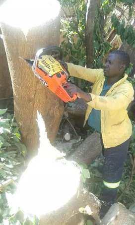 Tree felling services.