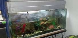 6 fishtanks with fish for sale