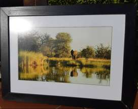 Elephant Picture Framed