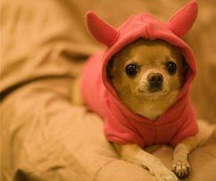 Возьму на передержку в квартиру мелкую собаку