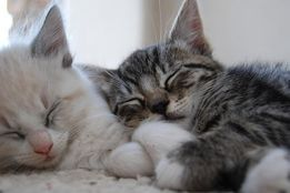 Платна перетримка котиків.