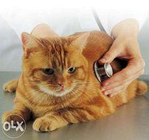 ветеринар на дом Херсон