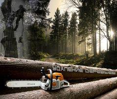 Спил деревьев, распил дров