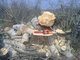Спил деревьев , удаление, валка, обрезка. Услуги бензопилой.