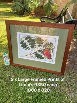 2x Large Prints of Litchies behind Glass