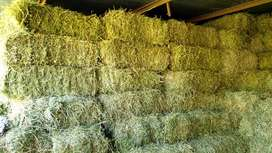 Lucerne Bales for sale (top quality) R68 per bale (+-20Kg) negotiable