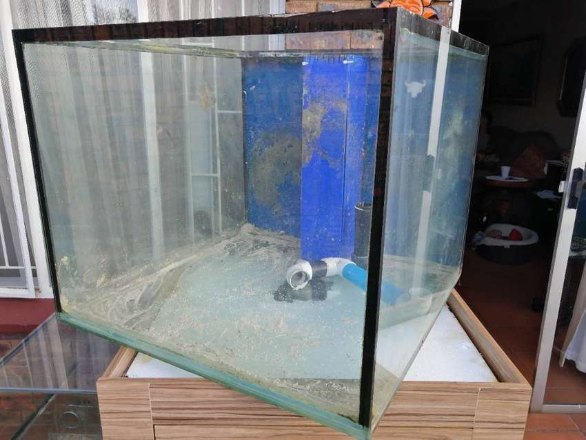 Cube Fish Tank, Stand and Sump for sale