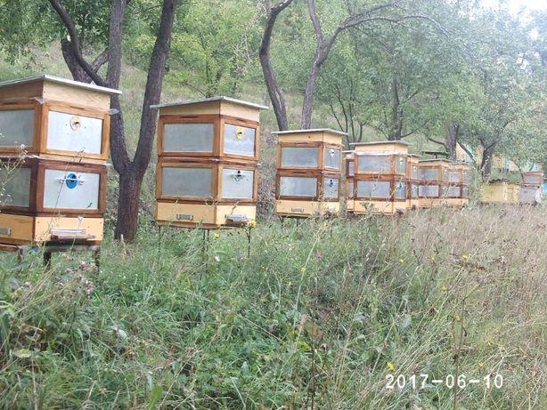 Продам улья для пчел