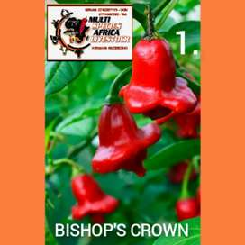 Multi Specie's 62 x Chilli Seeds and Trees
