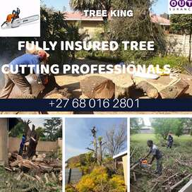 Boomsloping/Tree cutting. Insured tree felling