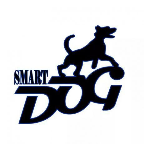 Дрессировка собак в Запорожье - команда SmartDog Запорожье - изображение 1