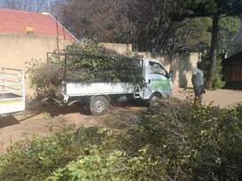 Tree Felling and garden