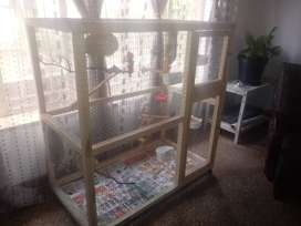 1m x 1m x 60 cage plus 4 finches and accessories. 1500 not neg