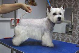 груминг, услуги по уходу за шерстью собак и кошек