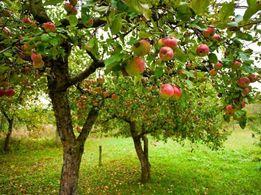 услуги по садоводству (обрезка и прививка плодовых деревьев, винограда
