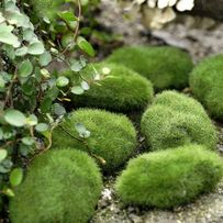 Мох искусственный для декора, камни декоративные, имитация травы